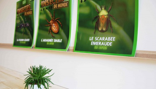 Insectes du monde_Antartik_photo 2